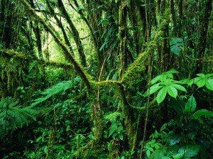MonteverdeRainforestCostaRica_hengphan-300x224